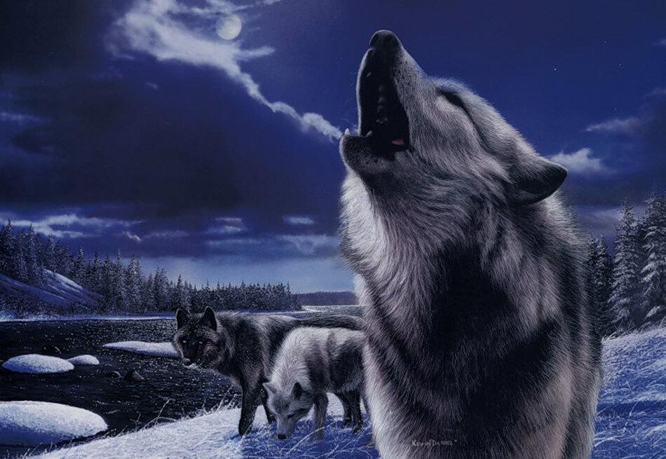 90-летием женщине, картинки одинокая волчица